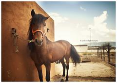 1m (Jordi Ortol) Tags: horse naturaleza mountain textura luz nature animal forest canon caballo poste plantas 14 cable bosque cielo nubes land l 5d 24mm usm montaa height altura tierra grano montanya markii analgico ruido jokie jokiepepillo