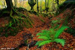 - La Dama y el helecho - (Oscar Pea fotografa) Tags: helecho bosque otoo zb bizkaia vizcaya gorbea hayedo