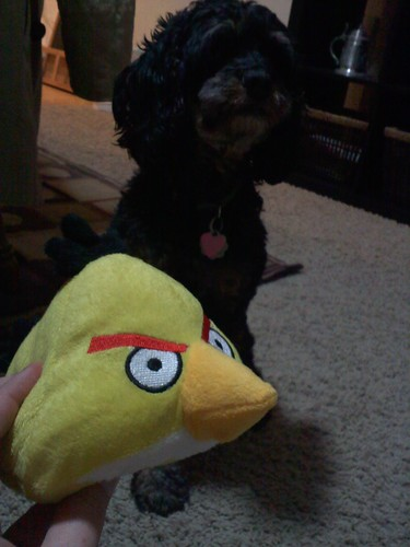 Angry Birds dog toy