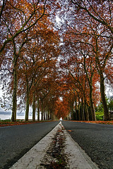 Couleurs d'automne (Matthieu Luna) Tags: pictures road red orange france color tree green digital automne canon landscape rouge eos rebel soleil photo photographie couleurs vert matthieu ombre route 1750 paysage tamron vanishing 31 arbre couleur champ ligne trait dautomne pointdefuite xti 400d