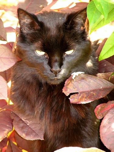 Autumn 2008 - handsome Wolf