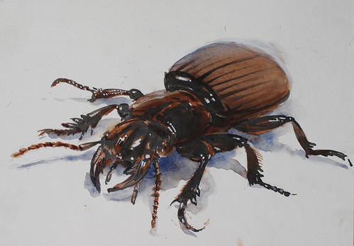 beetle by Spencer Mackay