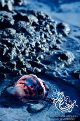Purity - كل عام وأنتم بخير (Ali Mahfoodh) Tags: nikon purity عيد مبارك سعيد d300s أضحى