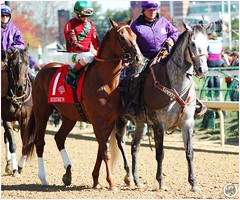 Birdrun (Shazstock) Tags: horse black cup grey bay mare racing chestnut colt stallion thoroughbred equine filly breeders