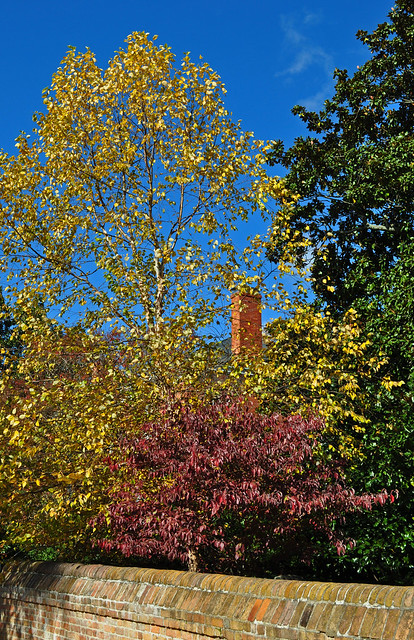 Birch, Dogwood, Bruton's Parrish (2)