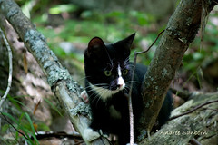 Oscar Takes a Long Long Hike-10.jpg (meeyauw) Tags: cats ocar