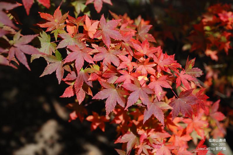 2011_1106福壽山農場DSC_3286