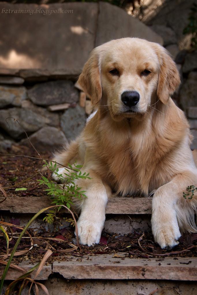 Precious Puppy Posing