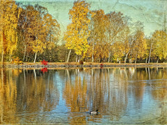Autumn, the year's last, loveliest smile.. (Bessula) Tags: autumn reflection tree texture nature river duck sweden coth simplybeautiful bej innamoramento memoriesbook bessula saariysqualitypictures redmatrix magicunicornverybest coth5