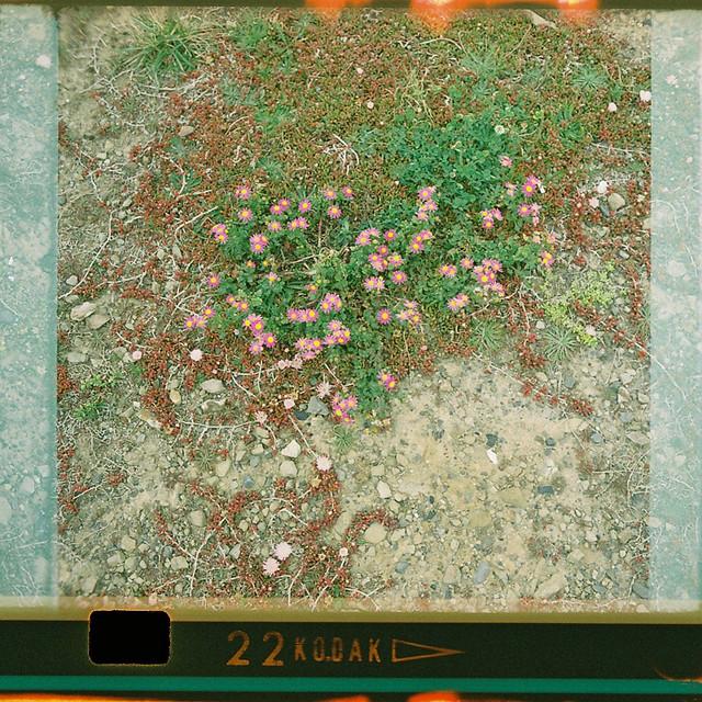 126-22_plants_3