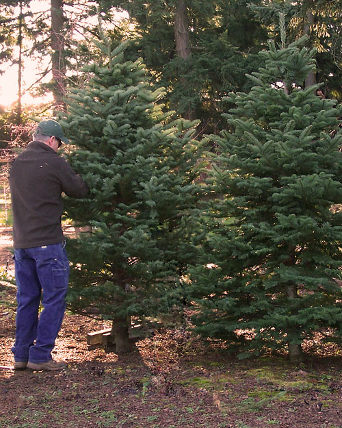 Joe + Tree