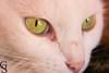 Floquinho-9-10 (Geraldo Stefano) Tags: gato gatobranco olharfelino geraldostefano