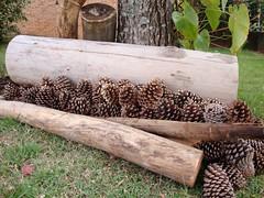 Arranjo de Natal (Santinha - Casas Possveis) Tags: christmas natal cone enfeites decorao pina pinhas econatal casaspossveis