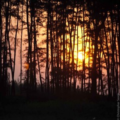 Sun through trees (Jeaunse23) Tags: sunset india landscape maharashtra konkan akshi akshibeach albaug