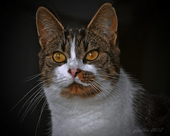 Snake eyes. (gos1959) Tags: cat eyes thilde jammerbugt mygearandme biersted