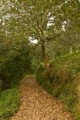 calella (R.Duran) Tags: espaa calle spain nikon espanha europa europe asturias trail espagne calella d300 asturies piloa 18200mmf3556gvr ltytr1