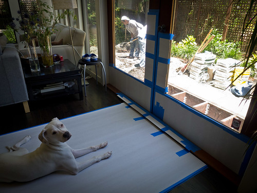 Day 2: Charlie, Dog Foreman