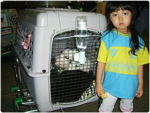 「長期有效」誠徵飛往美國西雅圖,洛杉磯,舊金山,等城市的護犬大使,如果是華航的最好,謝謝大家,20110629