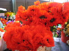 Fringed poppies