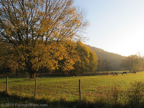Autumn morning in Donkeyland 1 - FarmgirlFare.com