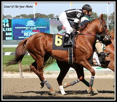 Uptowncharlybrown (EVENTOF THE YEAR PHOTOS) Tags: horseracing thoroughbreds belmontpark xodo tapizar