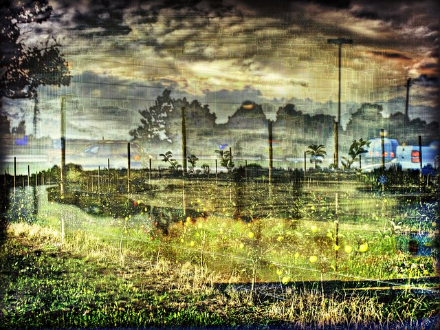 sunset sky ontario canada tree cars texture apple water car clouds rural parkinglot expression digitalart samsung pickuptruck niagara jordan master lincoln fields layer windshield hdr picnik appletree netart hypothetical topshelf photomatix vividimagination tonemapping artdigital newreality magicpix maxfudge awardtree awardtreespecial samsungmaster fujifilmfinepixs1500 trolledproud crazygeniuses samsunggalaxys paulboudreauphotography greenbeautyforlife netartii artdigitalexcellence netartiispecialaward specialawardcrazygeniusesshots