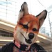 anthrocon_104