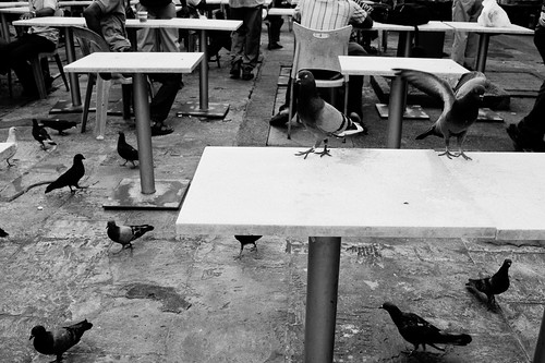 The pigeons get to occupy one table too!
