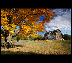 Fall Foliage (these are only words) Tags: autumn house ontario fall abandoned landscape country greatphotographers goldengrass theseareonlywords