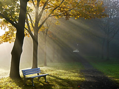 The lonesome bench (RainerSchuetz) Tags: park bench parkbench sunbeams morningmist idream tisexcellence bestcapturesaoi coth5 elitegalleryaoi masterclasselite