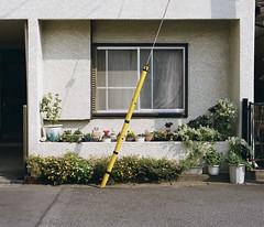 (masaaki miyara) Tags: flower color colour 120 japan mediumformat garden pentax takumar yokohama 6x7 67 2011 kodakportra400