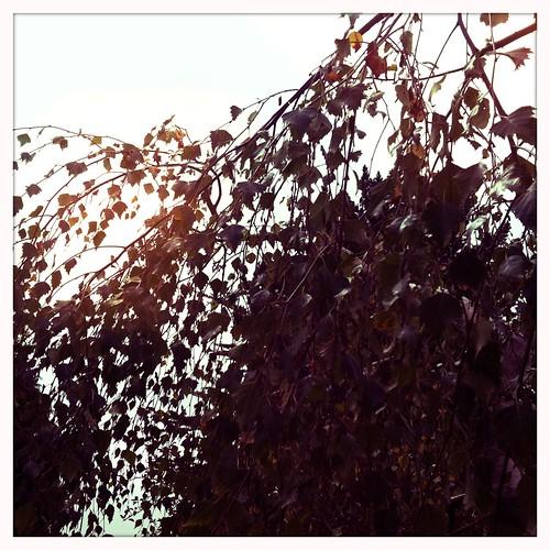 sun kissed leaves.. shapes