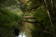 Camp Creek (Nathan Ostgard) Tags: trees green water oregon branches logs rivers loonlake bushes campcreek