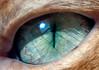 Détail à 100% de la précédente photo (tryphon4) Tags: cat chat pentax f45 crop tilt 90mm mfs k7 zoerk rogonars zörk