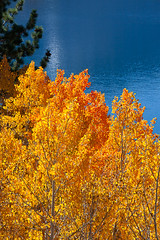 June Lake Aspen (Jeffrey Sullivan) Tags: california autumn copyright usa lake fall nature colors june canon landscape photography photo october nevada sierra eastern allrightsreserved 2011 junelakeloop monocounty jeffsullivan 5dmarkii