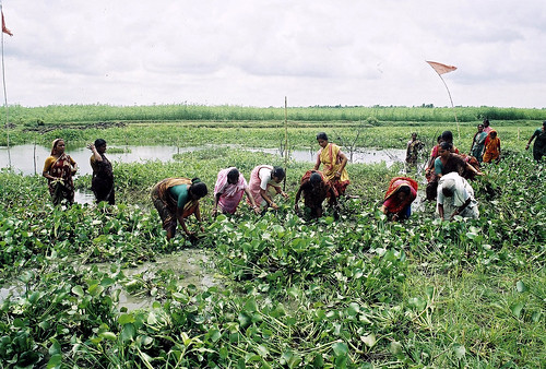 Vegetable farms and fisheries, Bangladesh. Photo by CBFM-Fem Com Bangladesh, 2006