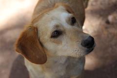 un pequeo amigo (ohkai ^_^) Tags: dog perro mascota perrito perrocallejero