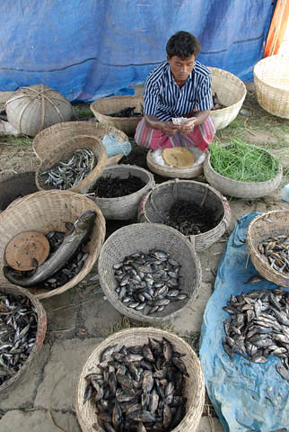 Preparing fish for sale, Bangladesh. Photo by WorldFish, 2007