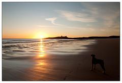 Dunstanburgh Castle (padraicyclops) Tags: dog castle beach silhouette sunrise landscape nikon fineart ruin footprints northumberland boxer embletonbay 1313 dunstanburghcastle 28nov11