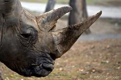 Rinoceronte (el_mono_) Tags: zoo safari rinoceronte varallo natureplus pombia