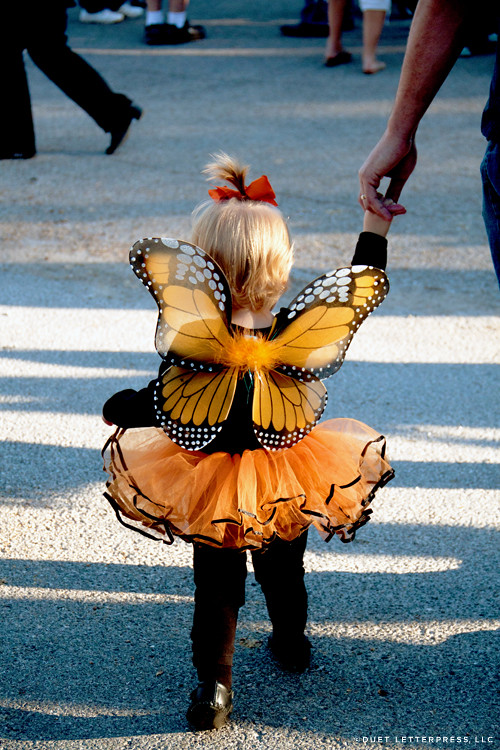 halloween / monarch butterfly