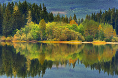Delightful Recollections (Ireena Eleonora Worthy) Tags: vancouverisland fairylake canada westcoastautumn colour reflections green northernstraitsphotography