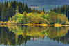 Delightful Recollections (Northern Straits Photo) Tags: vancouverisland fairylake canada westcoastautumn colour reflections green northernstraitsphotography