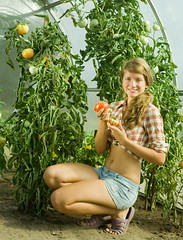 girl picking tomato (GoGardenGuides) Tags: food woman plant nature girl field female garden tomato outdoors countryside women natural gardening farm nursery farming young harvest vegetable teen greenhouse teenager greenery pick agriculture picking collecting hothouse warmhouse stovehouse