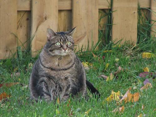 Autumn 2008 - Strongpaw was fat