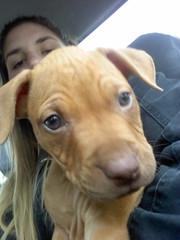 Satn (Cmo educar a un cachorro) Tags: cachorro