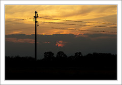 sunset (beppeverge) Tags: light sunset sky italy color green birds canon geotagged photography eos photo europe italia tramonto photos  uccelli cielo pylons tralicci beppeverge