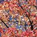 #44 Autumn