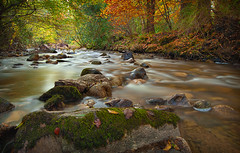 Enniskerry River. (Explored! Nov 17 2011 #408 ) (Ashley Lowry) Tags: autumn trees ireland brown colour green water leaves river landscape gold moss scenery rocks stones branches smooth peaceful serene flowing trunks wicklow enniskerry