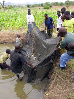 Aquaculture Fish pond in Mway Wathu Association, Tsuende village, Moatize District, Tete Province, Mozambique. Photo by Peter Fredenburg, 2008